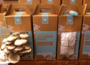 Oyster Mushroom Farm