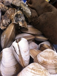 shellfish in mexico