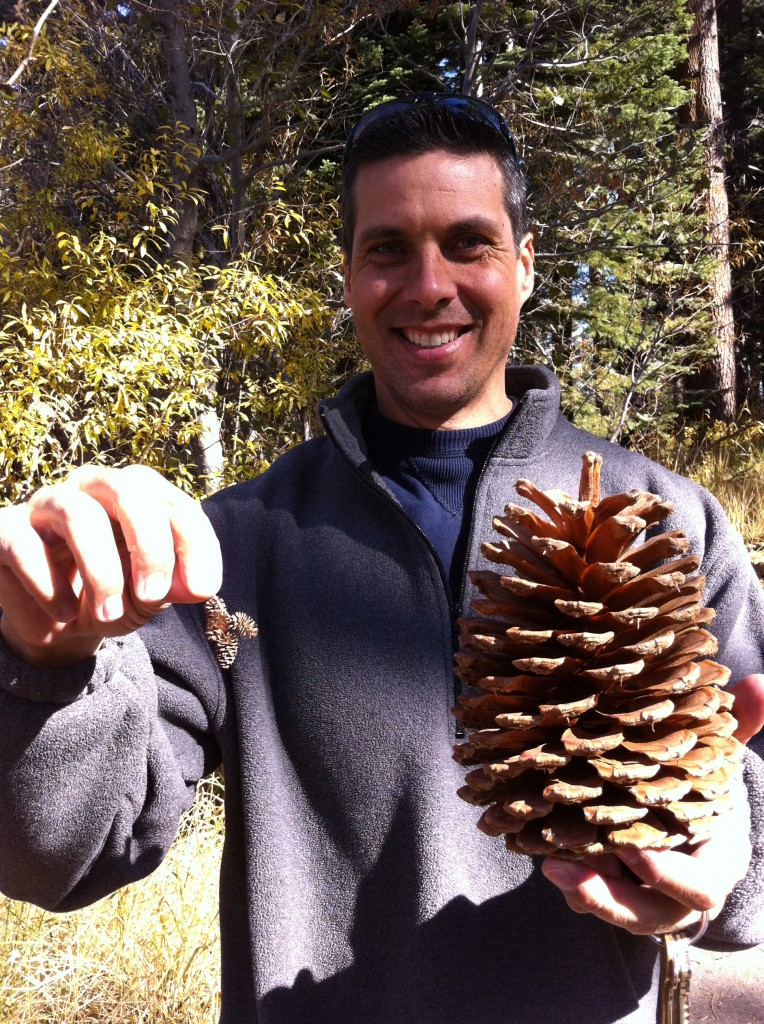 Largest Pine Cone in Lake Tahoe