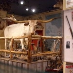 Visit a Taxidermist's Dream Museum in San Antonio