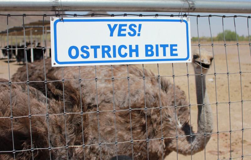 Ostrich Bite Picture