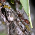 Bucket List of 23 Bugs Around the World to Eat