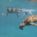 Search for Sea Turtles & Sharks in Olowalu