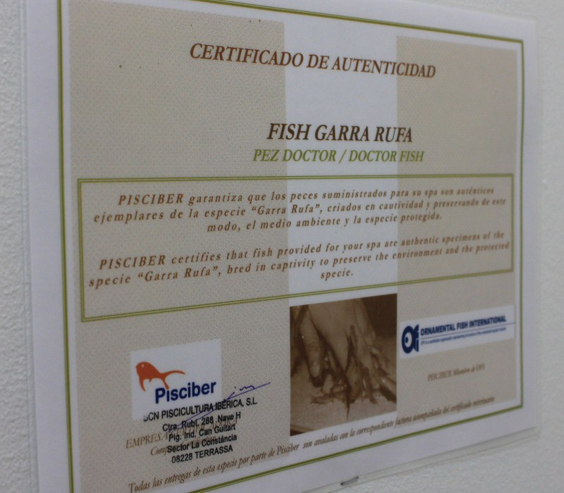 Fish Spa Certificate