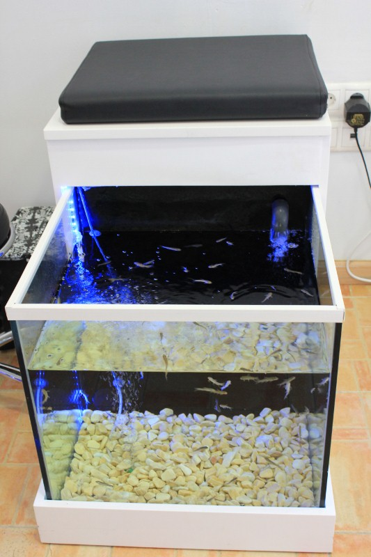 fish pedicures at fish spa