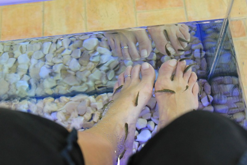 Fish Pedicures at the Fish Spa