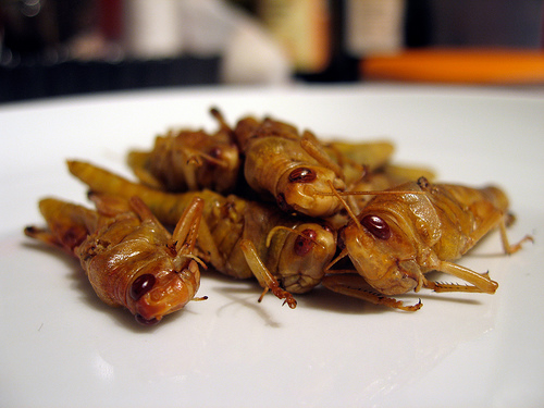 Edible Bugs Pictures of Locusts