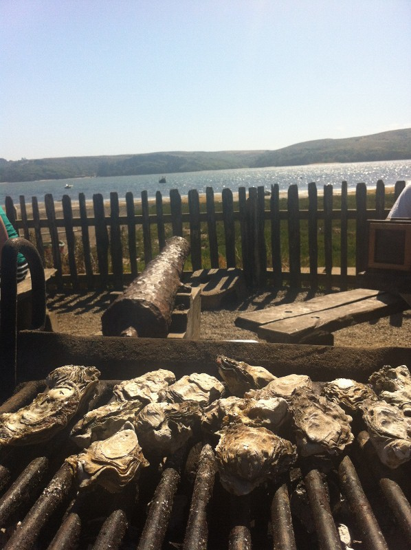 Grill at Hog Island Oyster Farm