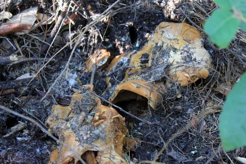 mushroom forage find