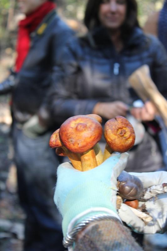 mushroom hunting find