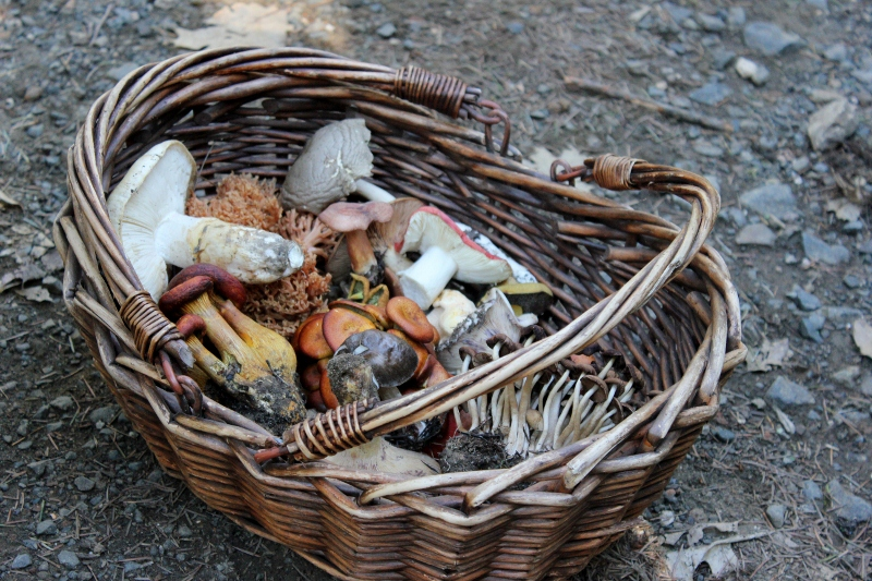 wild mushroom hunting bounty