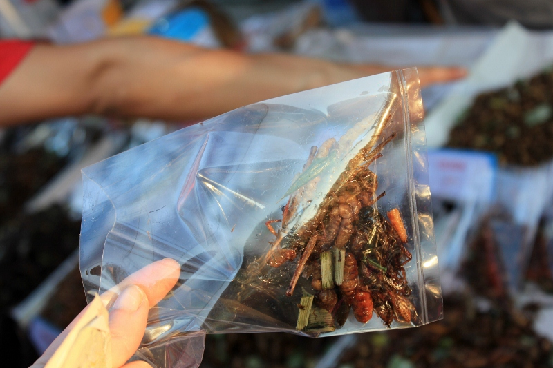 Edible Insects in Chiang Mai, Thailand