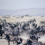 Get Travel Vaccinations for an African Safari