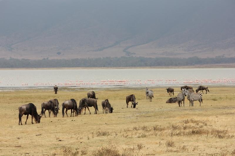 flamingos on African safari