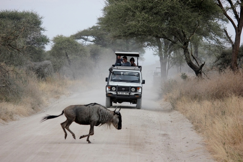 Bucket Lists: Go on an African Safari