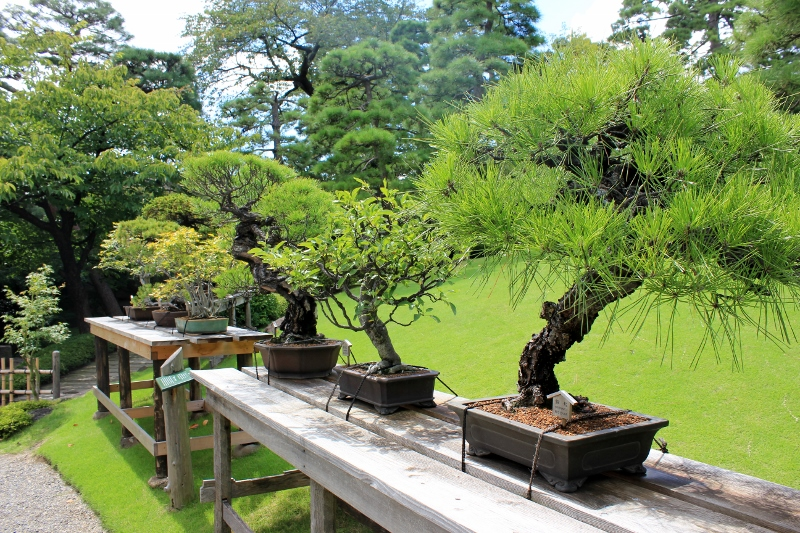 Bonsai at Happo-en Japanese Gardens