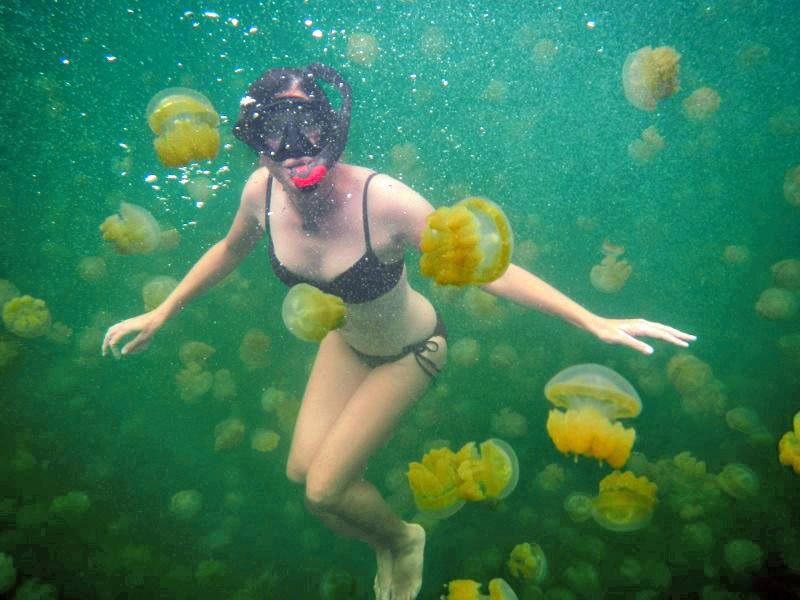 Jellyfish Lake in Palau