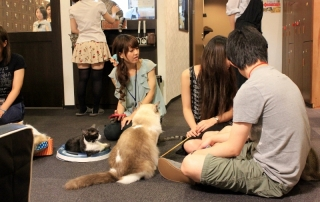 Calico Cat Cafe in Tokyo