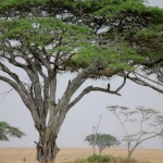 Spot the Big Five on an African Safari