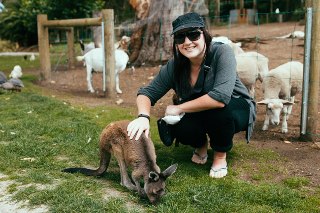 Bucket List Adventure: Kangaroo in Australia