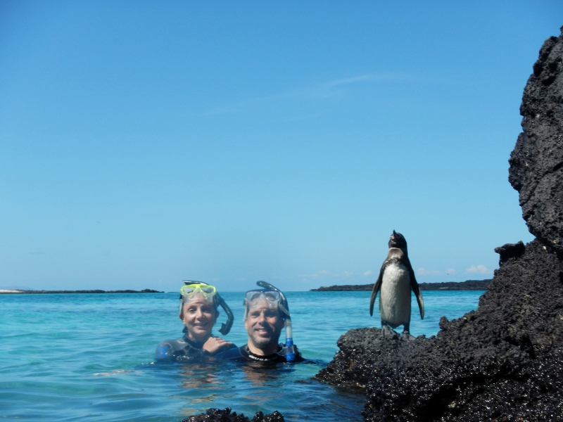 Penguins in Galapagos