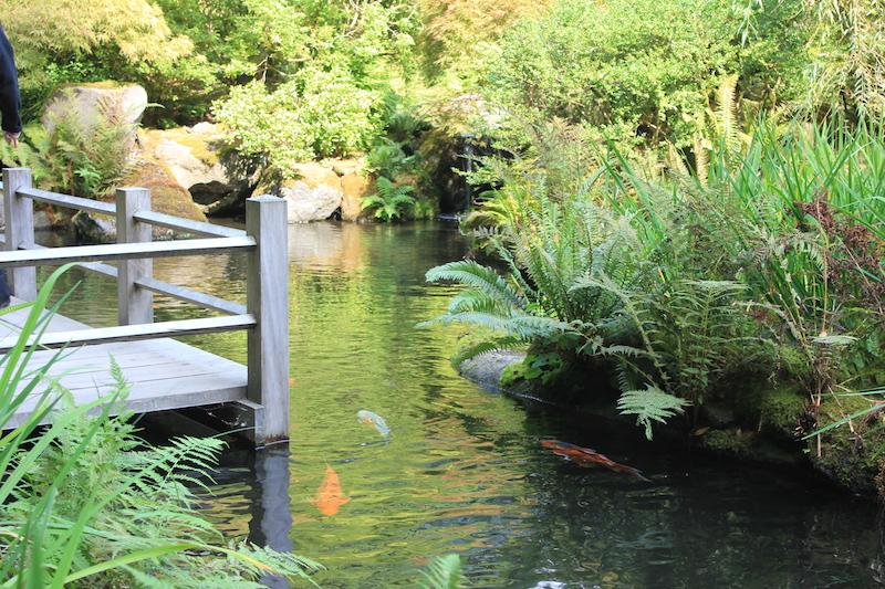 Koi Pond at the Japanese Garden in Portland, Oregon