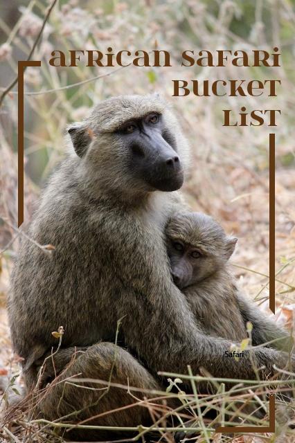 Tanzania Safari Bucket List