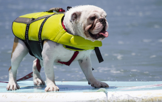 Dog Bucket List: Paddle Board