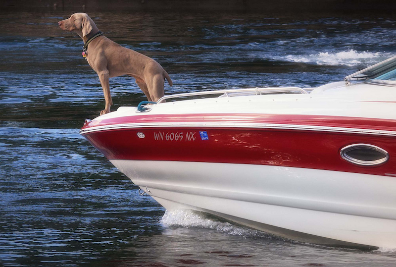 Dog Things to do: Ride in a Boat