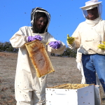 Be a Beekeeper for a Day in Northern California