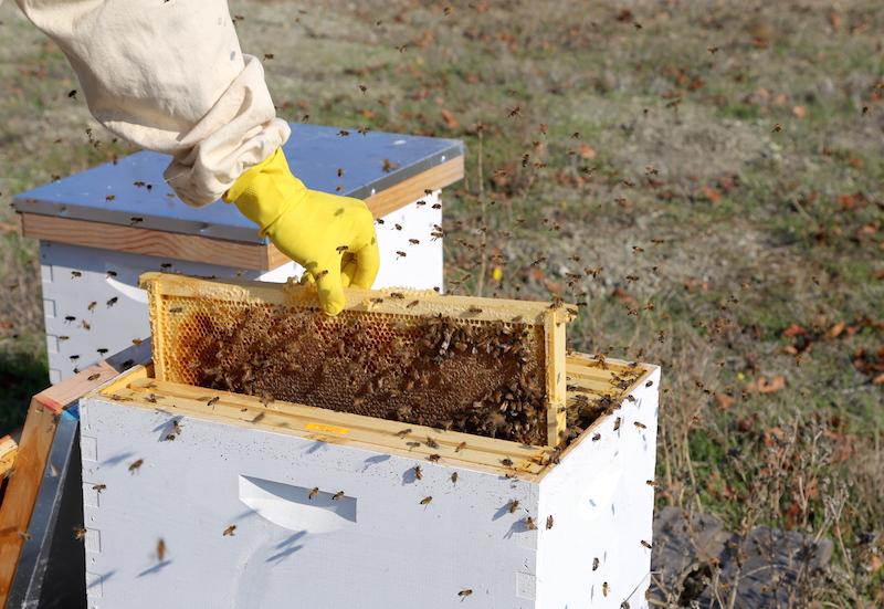 Beekeeping in Petaluma at Keller Winery Estate