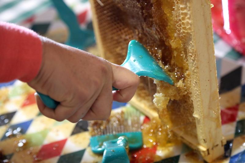 Scraping Honeycomb while Beekeeping in Petaluma