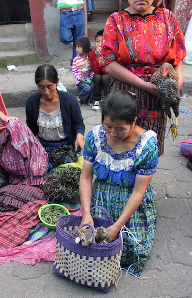 Kittens for Sale at Chichi Market in Chichicastenango Guatemala