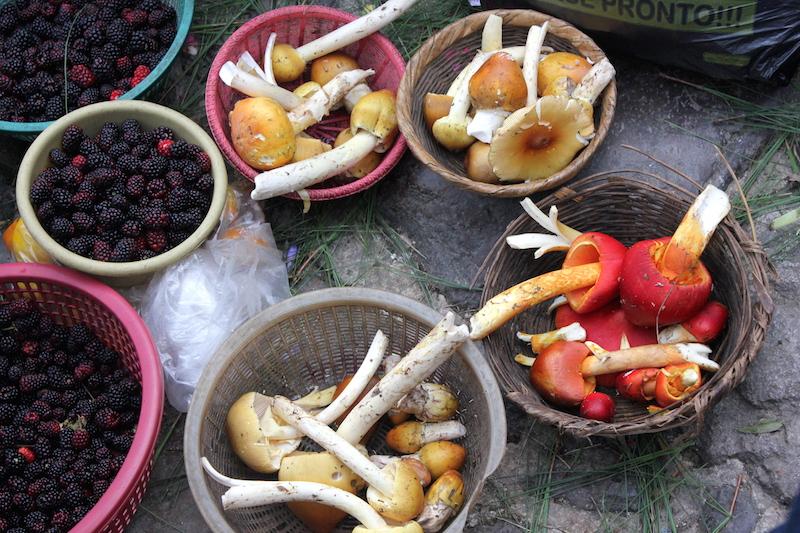 Fresh Mushrooms for Sale at Chichi Market in Chichicastenango Guatemala