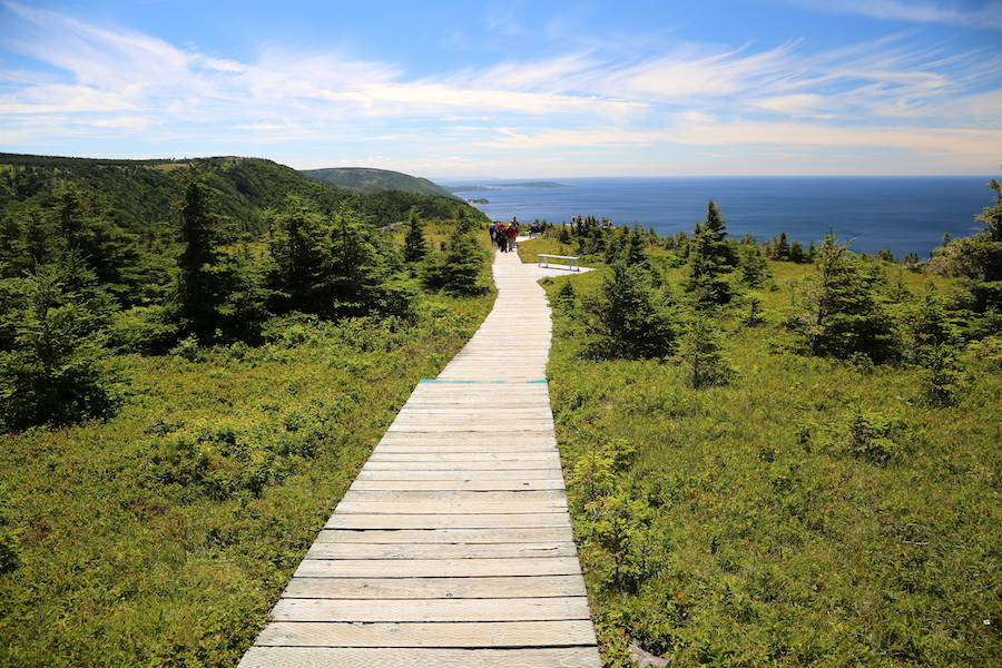The Skyline Trail boardwalk on the Cabot Trail