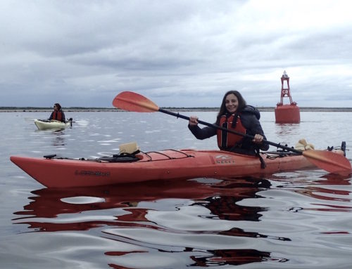 Canada: Kayaking with Beluga Whales in Manitoba