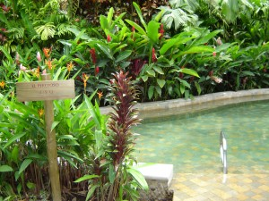 Tabacon Costa Rica Hot Spring