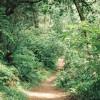 point reyes trail