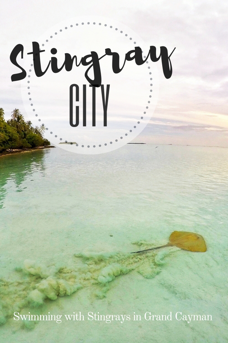 Stingray City Tour: Swimming with Stingrays in Grand Cayman