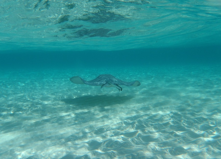 Stingray City: Swimming with Stingrays Tour in Grand Cayman