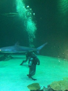 sharks in Las Vegas