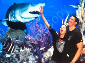 annette white with sharks in Las Vegas