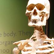 Bodies Exhibition Las Vegas