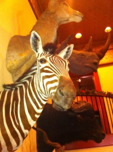 Taxidermist Zebra