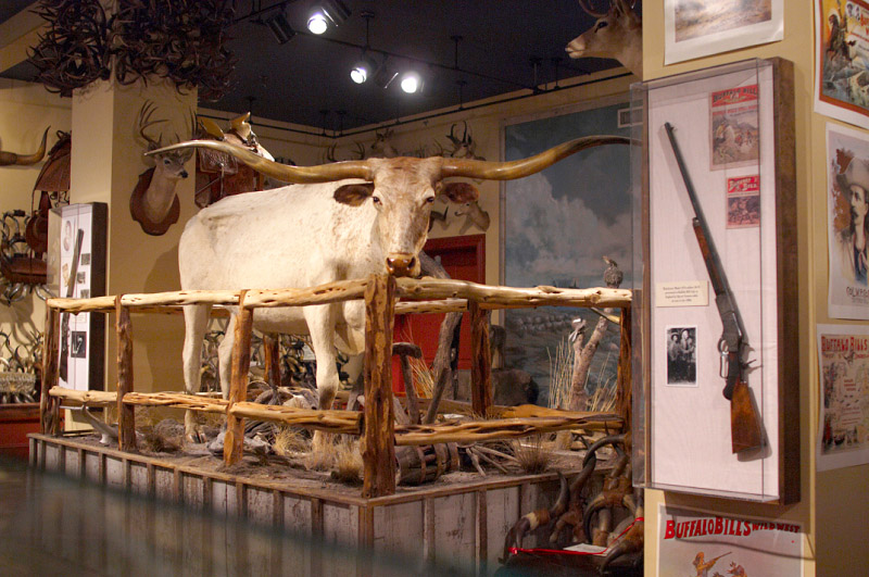 how to become a taxidermist in texas