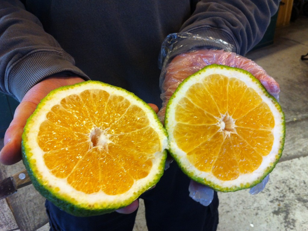 Cut Ugli Fruit