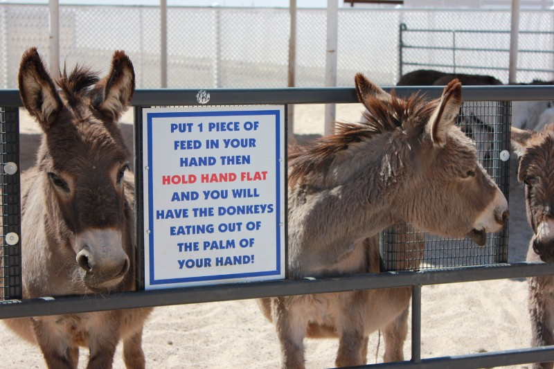 Donkeys at Ostrich Farm
