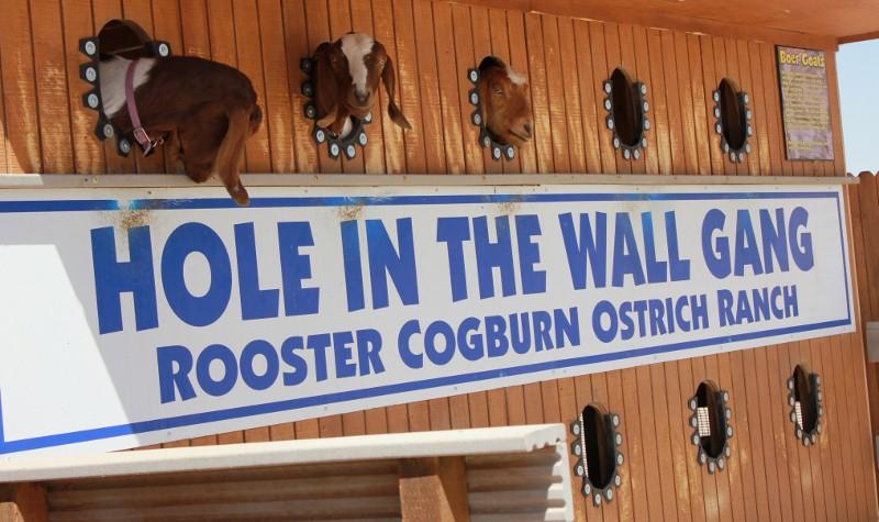 Goats at Ostrich Farm