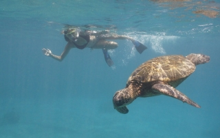 Annette White Swimming with Turtles in Maui