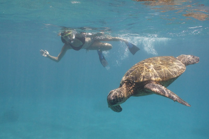 Bucket List: Annette White Swimming with Turtles in Maui